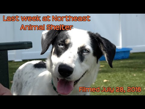 Northeast Animal Shelter Dogs Available