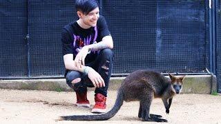 MEETING KOALAS & KANGAROOS!!!