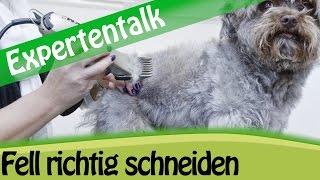 Fellpflege: Hundefell Scheren & Schneiden - Expertentalk