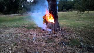Lightning-Struck Tree Burning from Inside