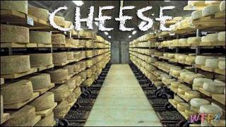 What is Cheese? Cheese 101-All You Ever Wanted To Know About Cheese