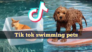 Funny animals swimming cats and dogs 2020