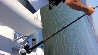 Candlestick point shark slaying