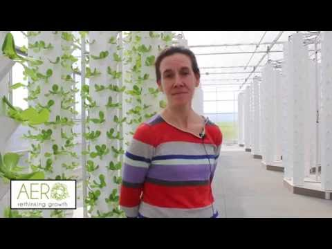 Aeroponic Soilless Growing Review AERO Development Corp - Hudson Valley Vertical Farms NY