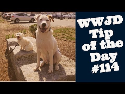 Happy Dogs, What Would Jeff Do? Dog Training Tip of the Day #114