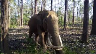 Maniyan,the friendly wild elephant... Wayanad wildlife sanctuary