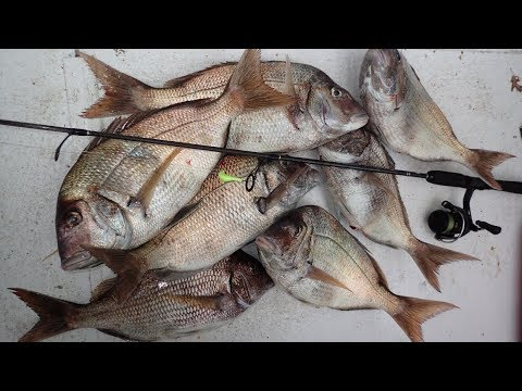 Jumbo Porgy Jigging - Find And Catch!