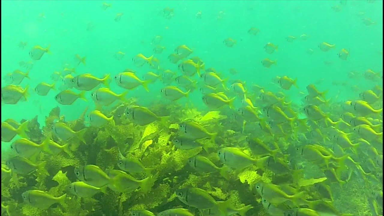 GoPro: Polar Pro Green Water Filter Testing @ Shelly Beach ...