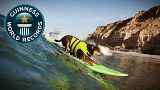 Longest wave Surfed By a Dog - Meet The Record Breakers - Guinness World Records