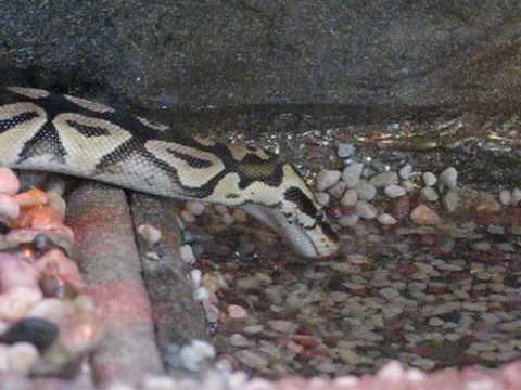 snake pit lima ohio Lima, perus huvudstad var ett tag den vampyrrikaste staden i sydamerika det är numer en sabbatstad och de tidigare invånarna har spritt ut sig över kontinenten.