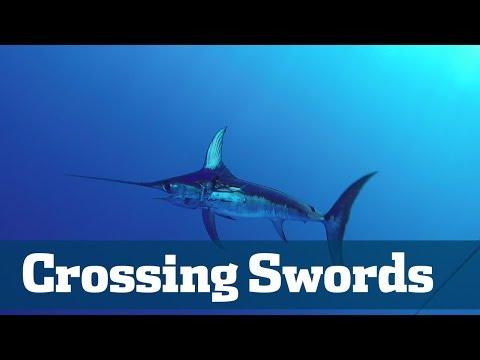 Crossing Swords - Florida Sport Fishing TV