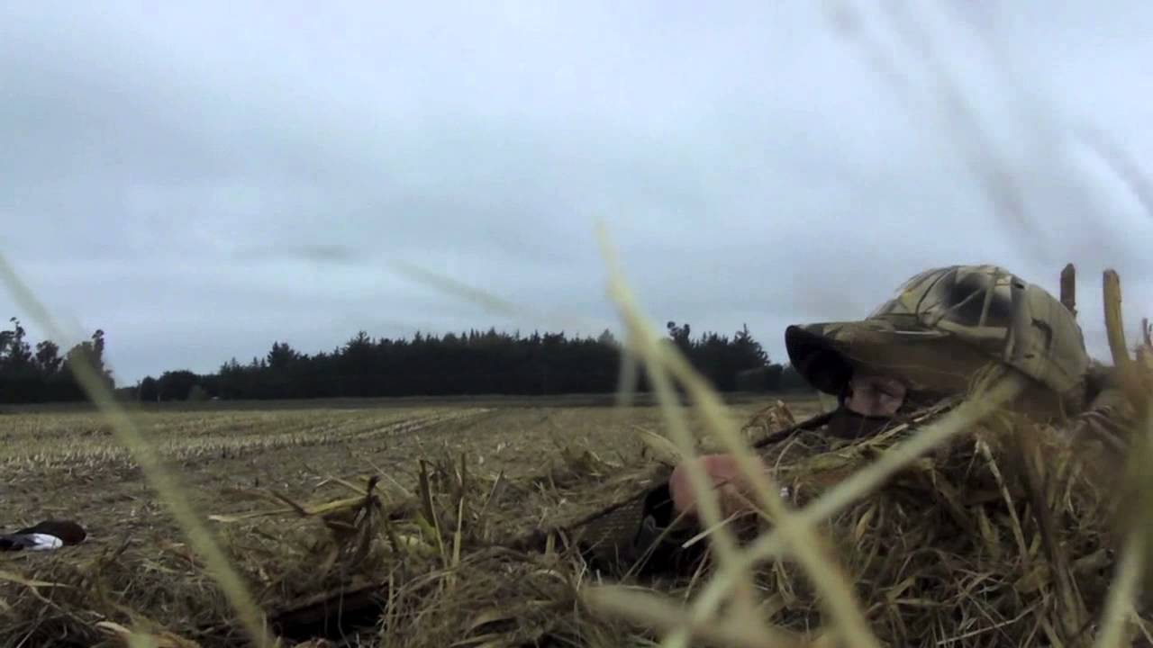 Nz Shooting Hd: New Zealand Duck Shooting Opening Weekend 2013