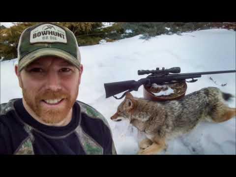 Coyote Hunting Western Ma