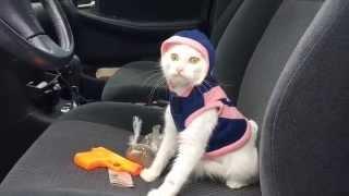 Funny Cat Video: Catnip Dealer (Ridin' Dirty Parody Video)