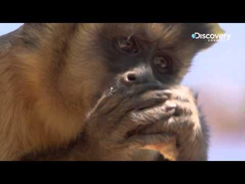 Life - Highly Intelligent Monkey