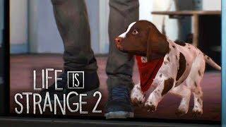 LIFE IS STRANGE 2 #7 - Navio, Capitão, Tripulação! (Gameplay em Português PT-BR)
