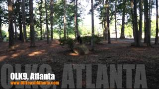 Send Away Place | 3 Year Old German Shepherd | Dog Training Atlanta