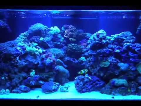 Painting your aquarium youtube for Fish tank paint