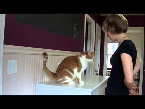 how to train a cat to sit