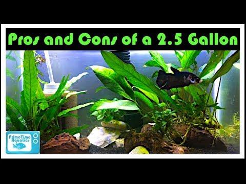 2.5 Gallon Fish Tank Pros And Cons: Should You Buy A 2.5 Gallon Fish Tank?