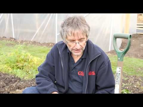Forcing Rhubarb In A Pot | How-To Guide | Kitchen Garden Magazine |