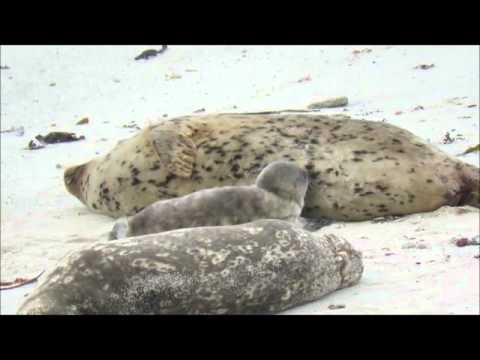 1580ecfd1a0462 Pup  11 Born at Hopkins Marine Station Beach - YouTube