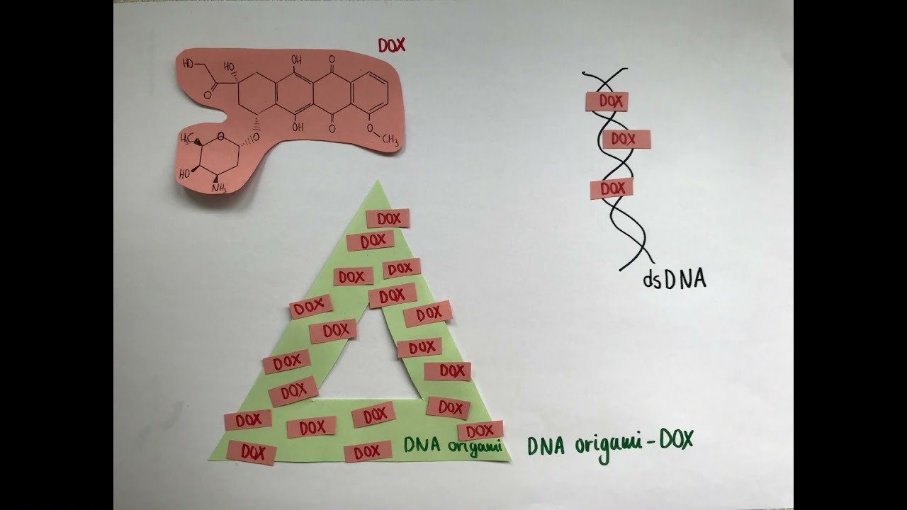 DNA origami: from folding paper to drug delivery