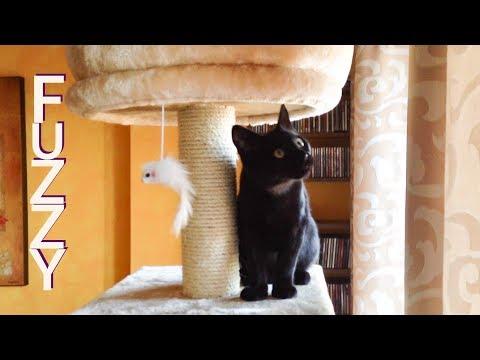 Cats Vlog 25 - Fuzzy the cat tree toy