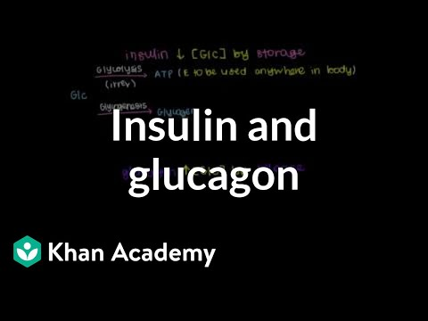 Insulin and glucagon | Chemical Processes | MCAT | Khan Academy