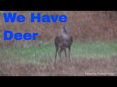 Cass County Deer Hunt