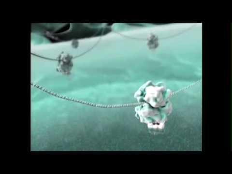 בניית אנימציה (של תא חי) עשויה להציל חיים