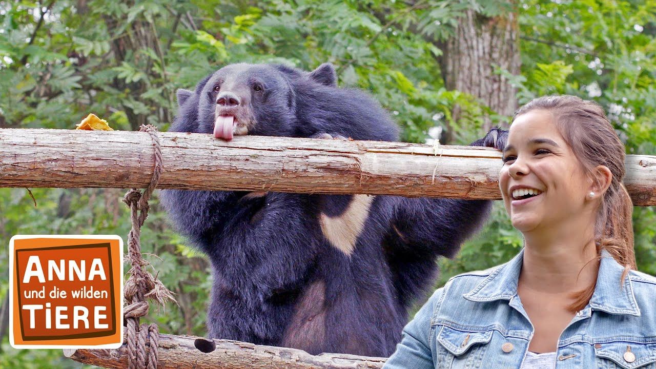 Honig Fur Den Kragenbaren Doku Reportage Fur Kinder Anna Und Die Wilden Tiere Youtube