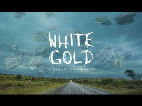 WHITE GOLD // South Africa's most valuable snail (Abalone Documentary)