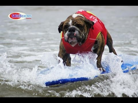 2011 Surf Dog Surf a Thon Dog Surfing Video