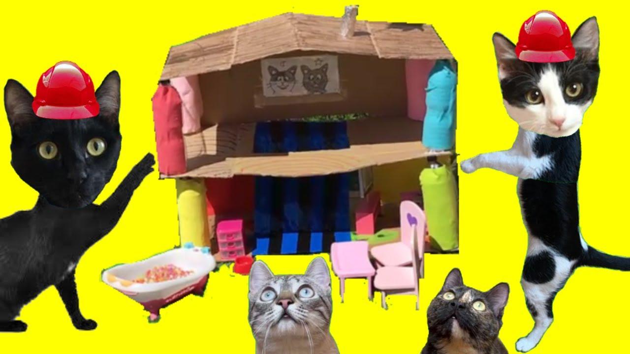 2 ideas de casa para tu gato con mis gatos graciosos Luna y Estrella / Videos de gatitos chistosos