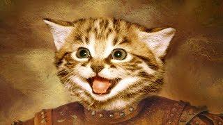 Смешное видео про котов 2017/FUNNY CATS 2017