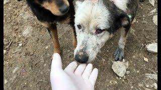 Bataklıktaki mağarada yaşayan hasta köpeklerimiz artık sizlerin sayesinde doyuyor
