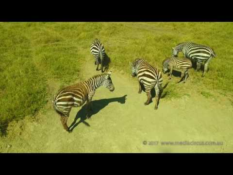 Wildlife from the air - Lake Nakuru, Kenya