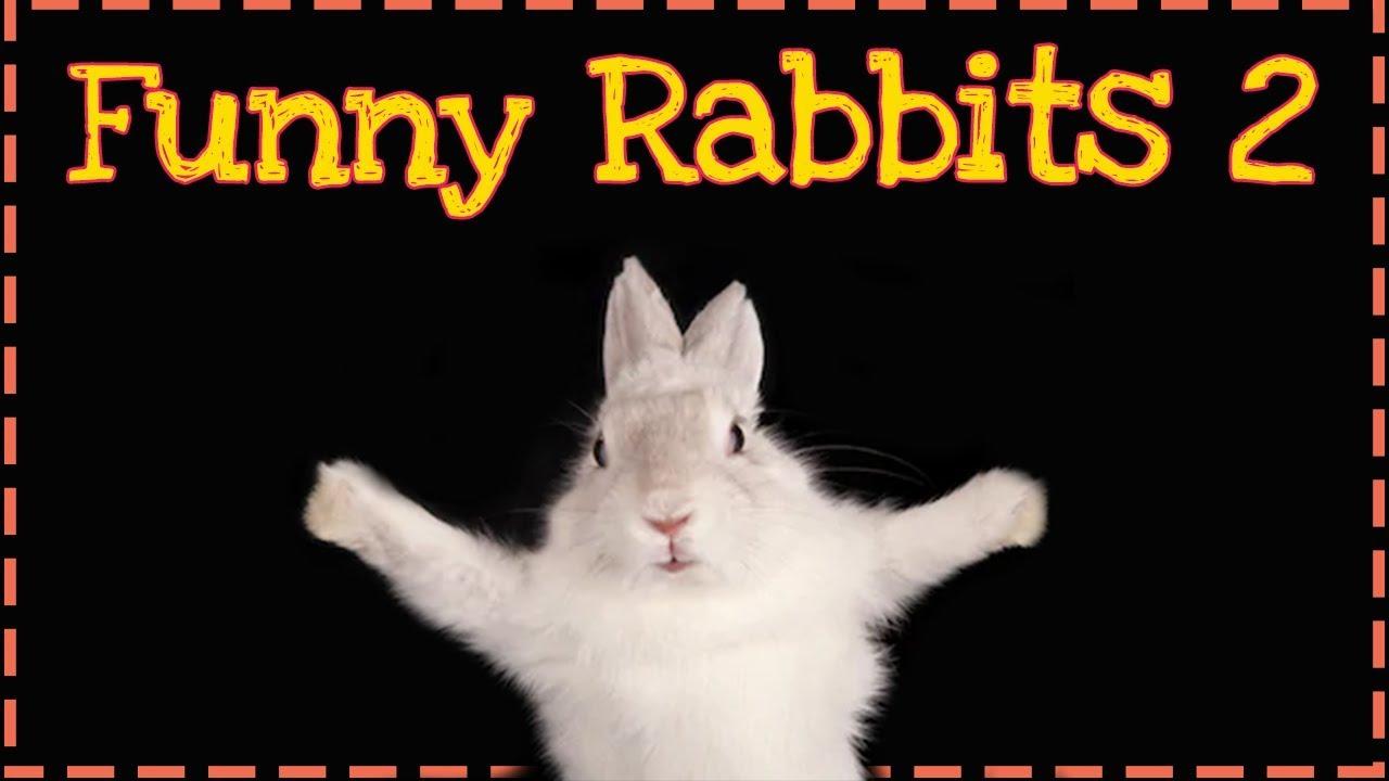 Śmieszne i słodkie króliki | Funny and cute rabbits | ODC.2