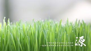 源 - 探索新加坡未来的农业发展:垂直种植