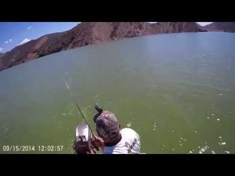 All TOP WATER BITE On Pyramid Lake Southern California