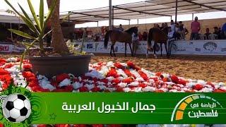 جمال الخيول العربية