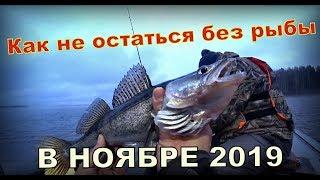 Как не остаться без рыбы в ноябре 2019. Приманки на окуня и судака