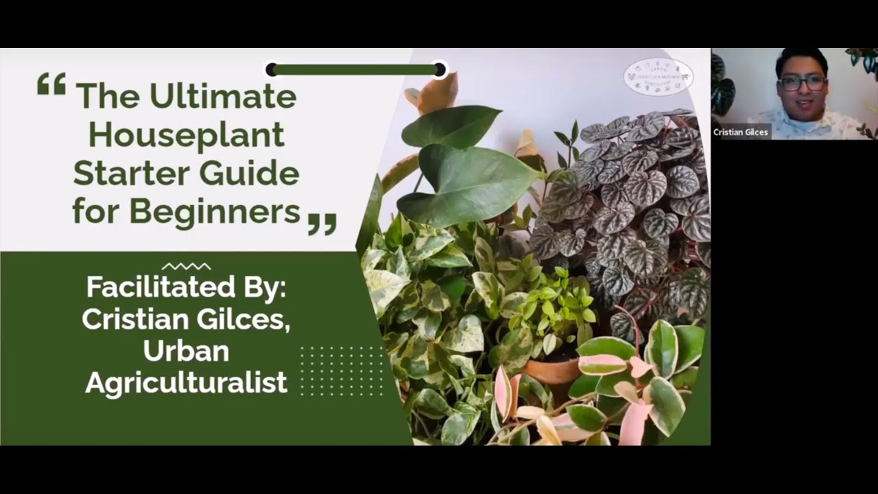 The Ultimate Beginner Guide to Houseplants