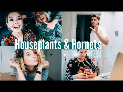HOUSEPLANTS AND HORNETS | WEEKLY VLOG