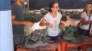 Distribuição do peixe da Semana Santa