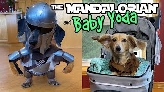 Ep#10: The Mandalorian & Baby Yoda  DOG EDITION (Homemade Costume)