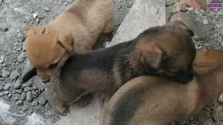 Những Chú Chó C๐n Dễ Thương Vô Đối | Cขte ṗuṗṗy d๐gs viḋeos | Cải TV