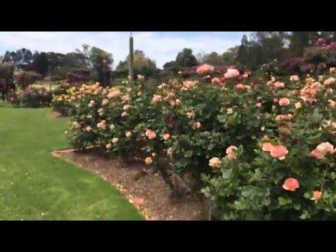 Victoria Rose Garden - Werribee / Melbourne