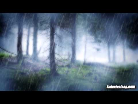 RAIN IN THE WOODS SLEEP SOUNDS | Nature's White Noise For Re